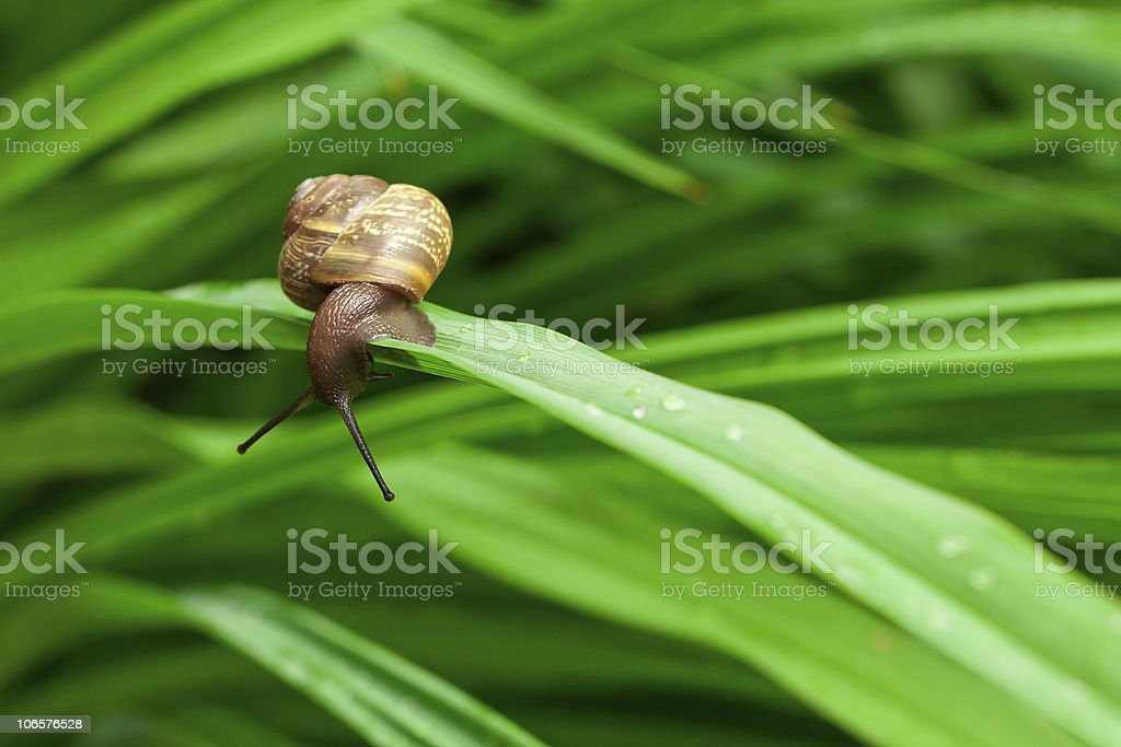 Close up of a snail on the leave stock photo