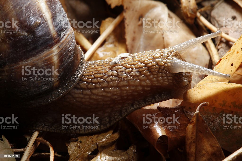 close up of a snail stock photo