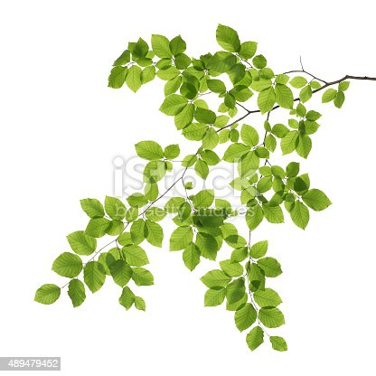 istock Close up of a tree branch 489479452