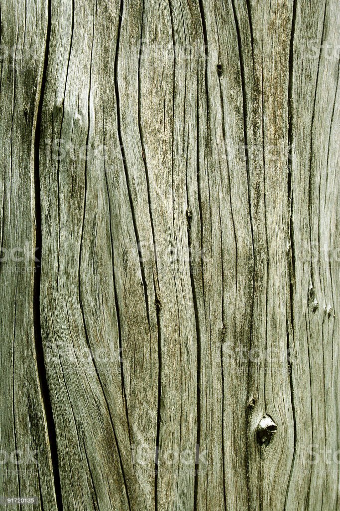 Close up of a tree without bark royalty-free stock photo
