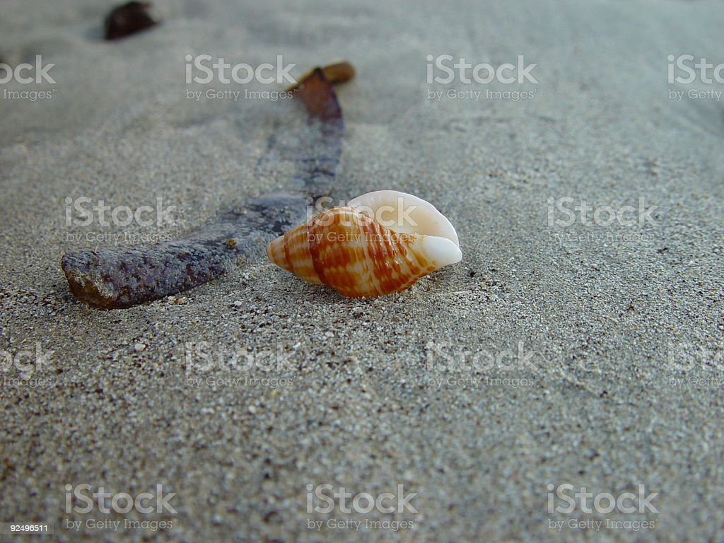 Close up of a tropical shell royalty-free stock photo
