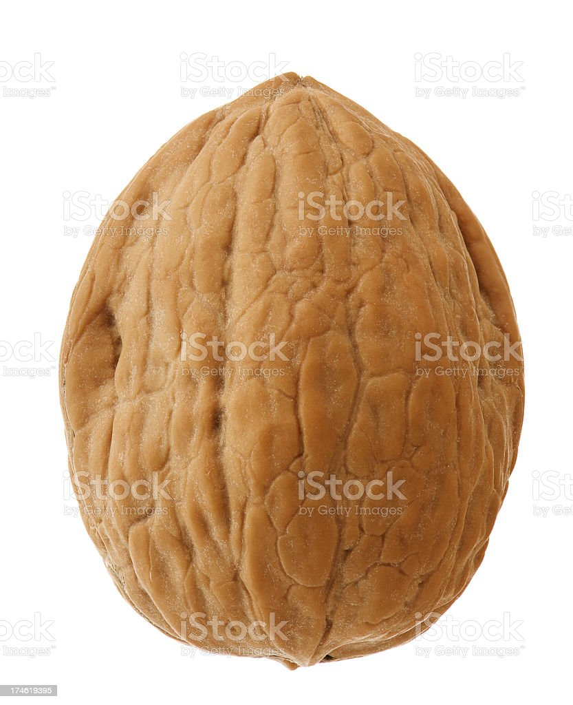 Close up of a walnut on a white background royalty-free stock photo
