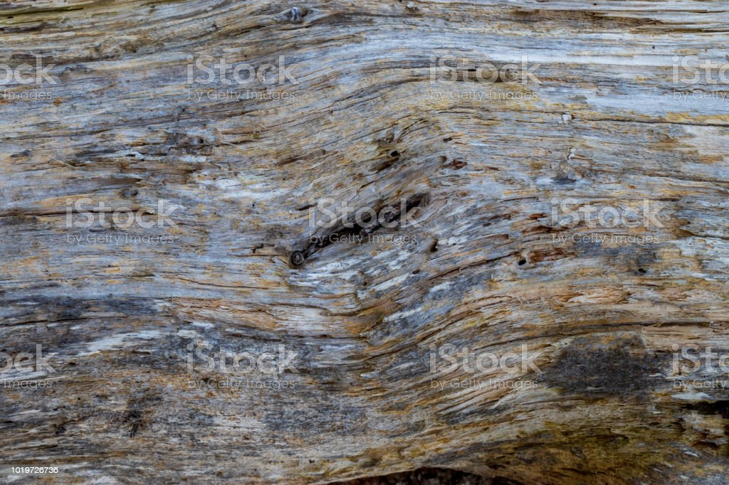 A close up of a weathered driftwood log. stock photo