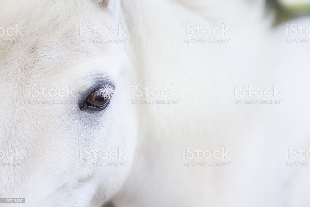 Close up of a White horse stock photo