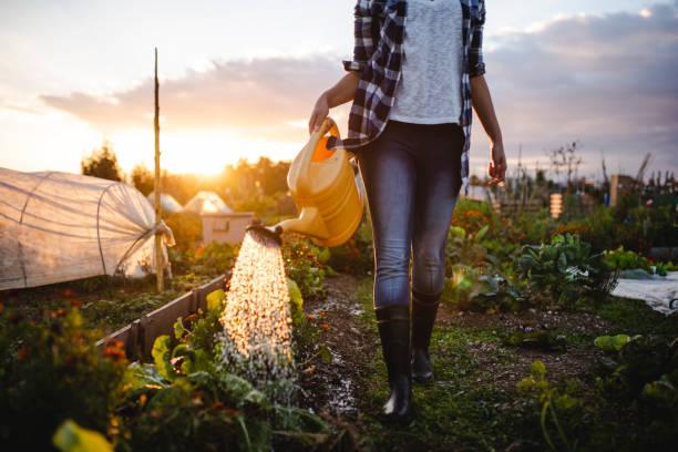 Nahaufnahme einer jungen afroamerikanischen Frau das Gemüse in ihrem Garten Bewässerung – Foto