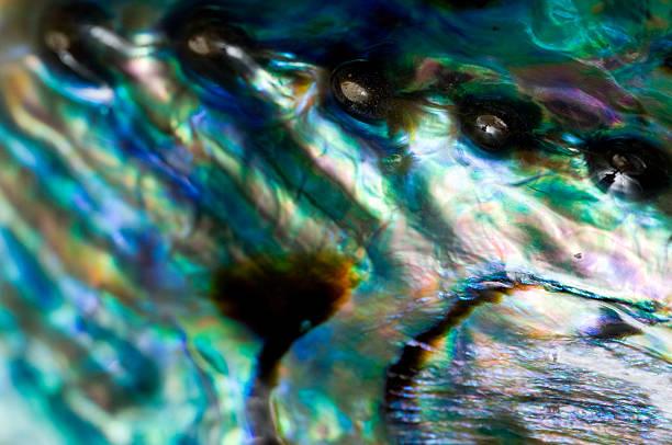 nahaufnahme von abalone shell - mark tantrum stock-fotos und bilder