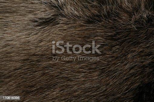 Detail of reindeer fur