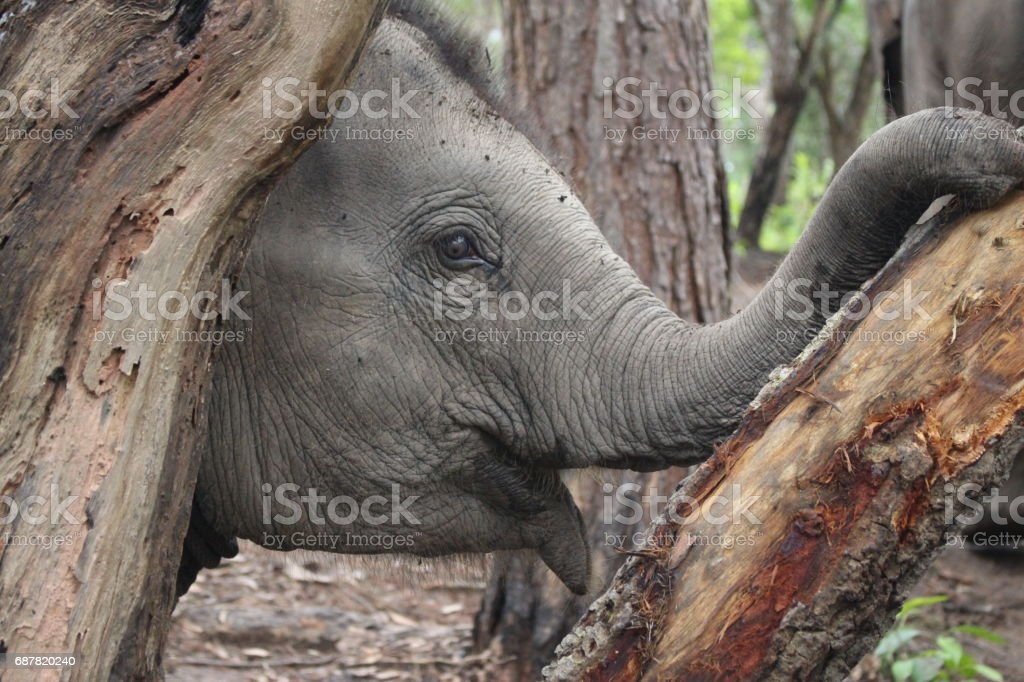 Close up of an elephant stock photo
