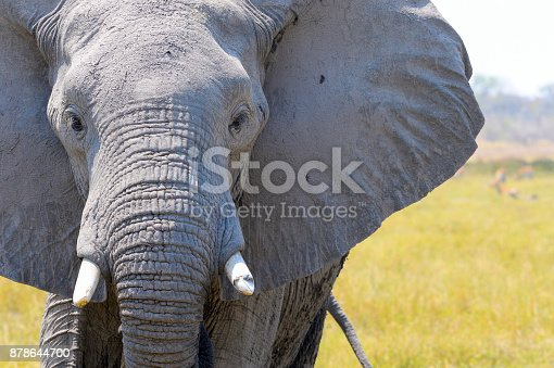 Close up of an elephants head. Eye and tusk are visible