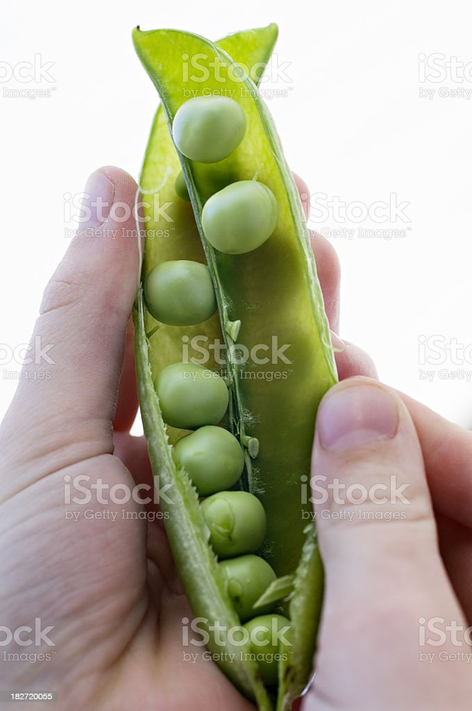 Close Up Of An Open Pea Pod stock photo