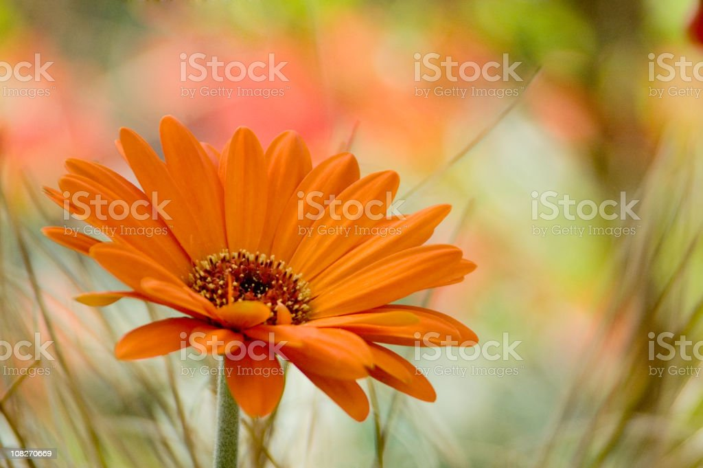 Close up of an orange flower in a field stock photo