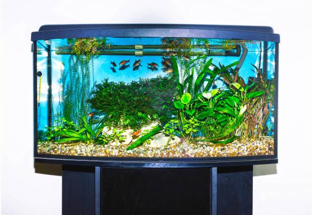 close up of aquarium tank full of fish - home aquarium stock pictures, royalty-free photos & images