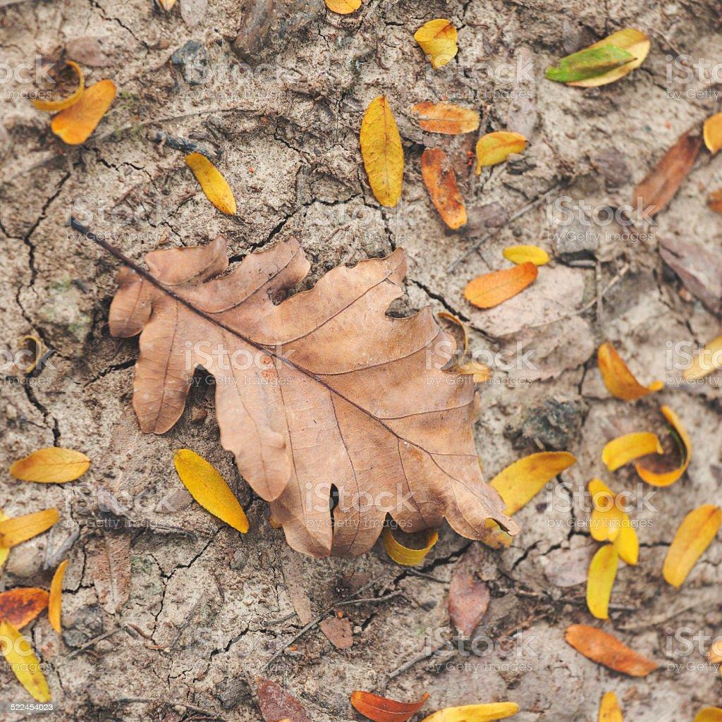 Close up of autumn leaf stock photo
