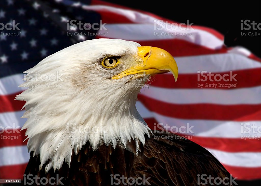 Close up of bald eagle against American Flag background stock photo