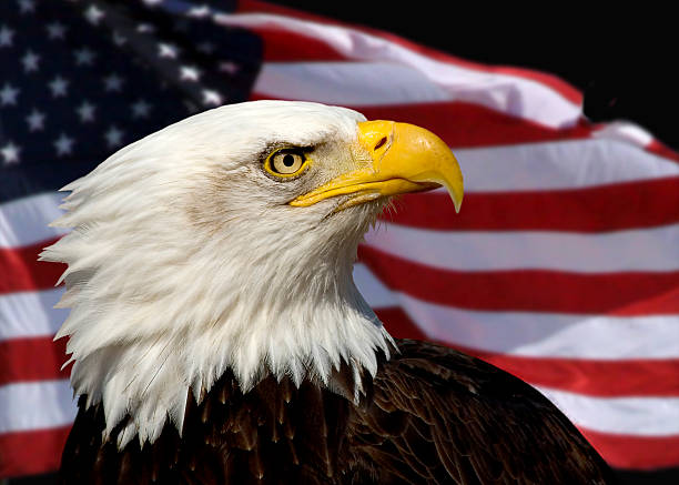 American Egal