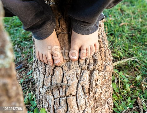 Barefoot of child playing in a tree in the back yard of a school