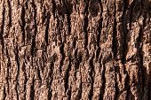 Close up of bark of tree texture brown background
