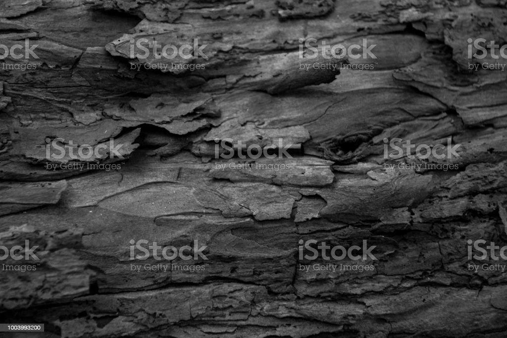 Close up of bark texture stock photo