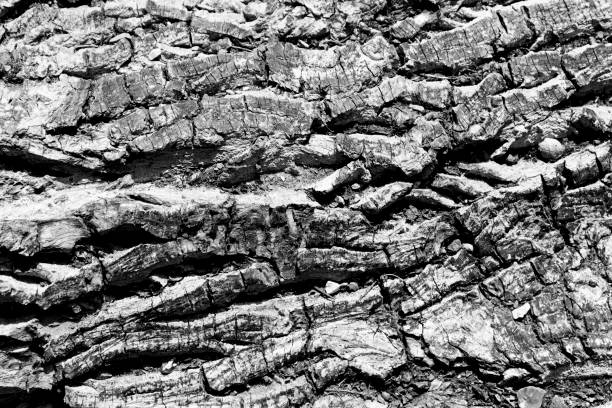 Close up of bark texture stock photo