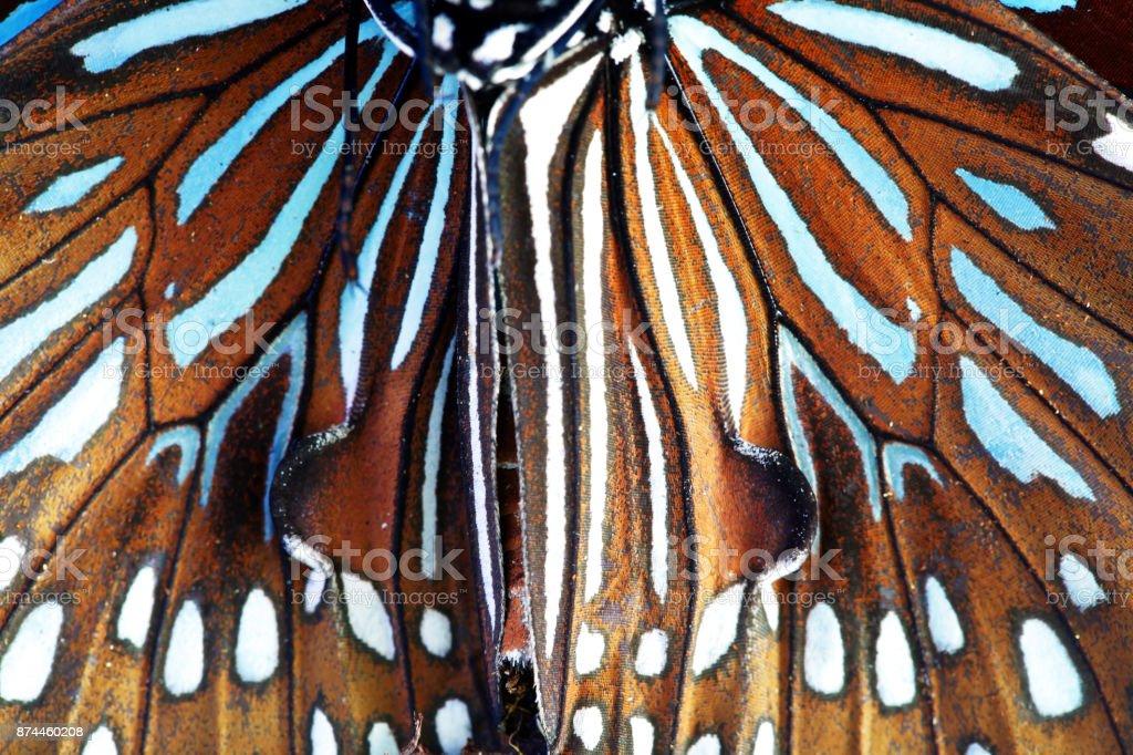 fechar de asa de borboleta bonita como plano de fundo - foto de acervo