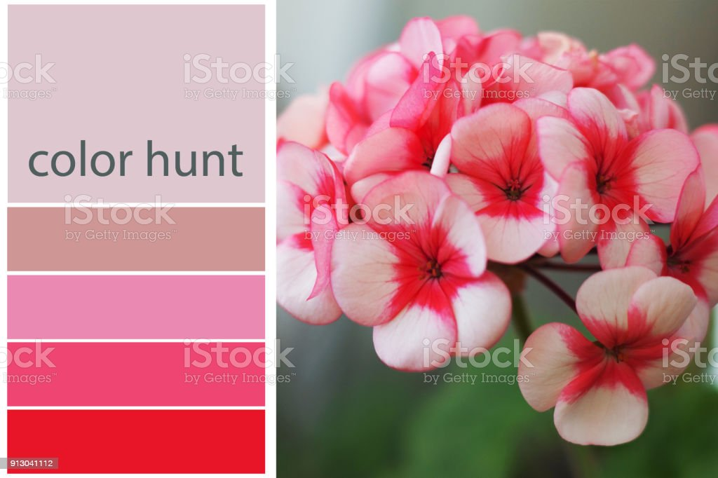 Close Up Of Beautiful Flower Background Colorful Pallets Nature