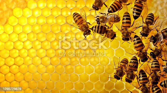 istock close up of bee hive 1295725679