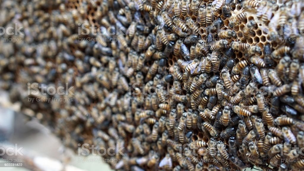 close up of bees on a beehive stock photo