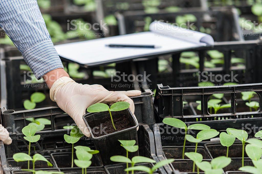 Close up of biotechnology engineer hand stock photo
