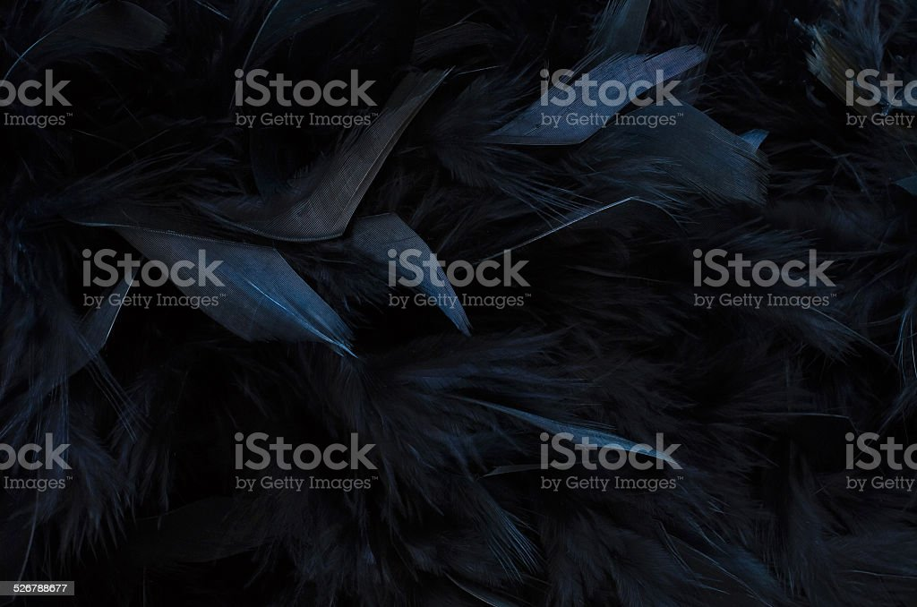 close up of black Feathers - textured background stock photo