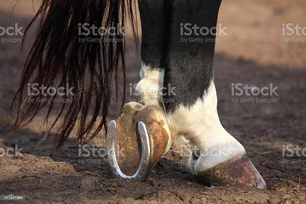 Nahaufnahme des schwarzen Pferdes hoofs – Foto