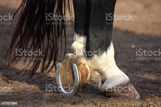 Photo of Close up of black horse hoofs