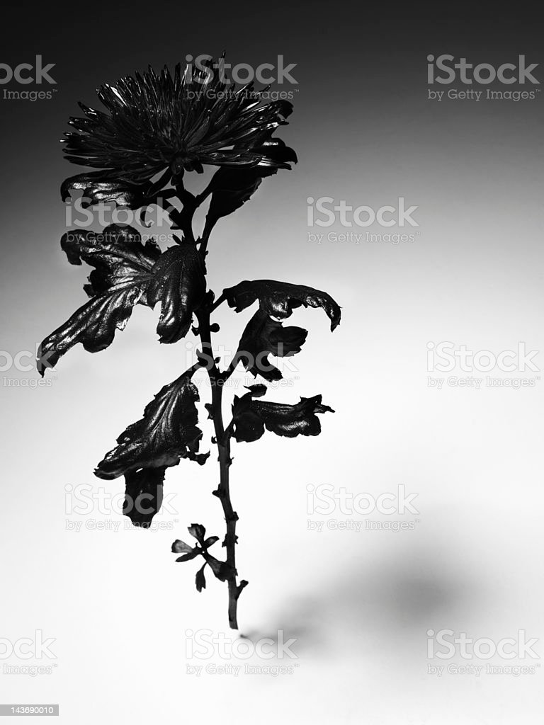 Close up of blackened flower stock photo