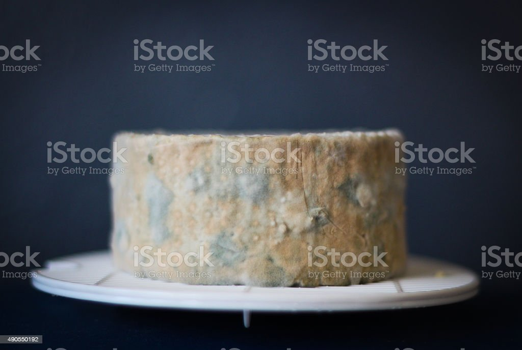 Close up of blue cheese made in domestic kitchen stock photo