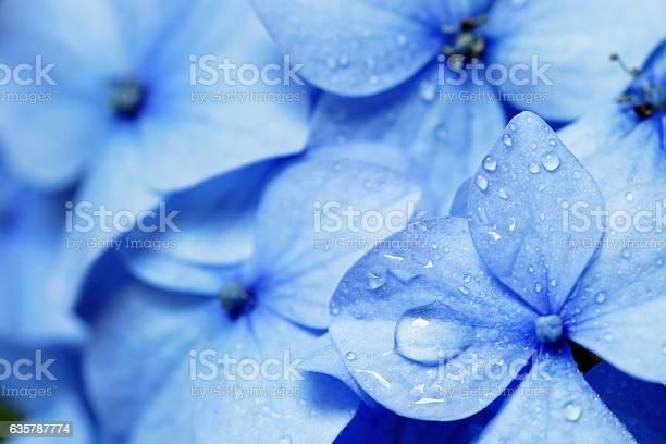 Photo of Close up of blue hydrangea flower