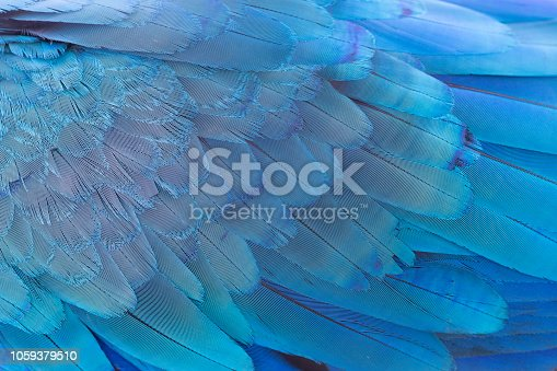 close up of blue wing parrot