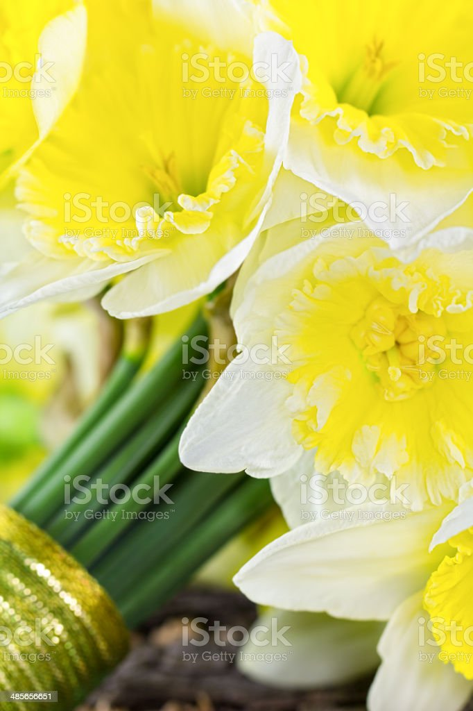 Close up of bride's bouquet with yellow and whited daffodils. stock photo