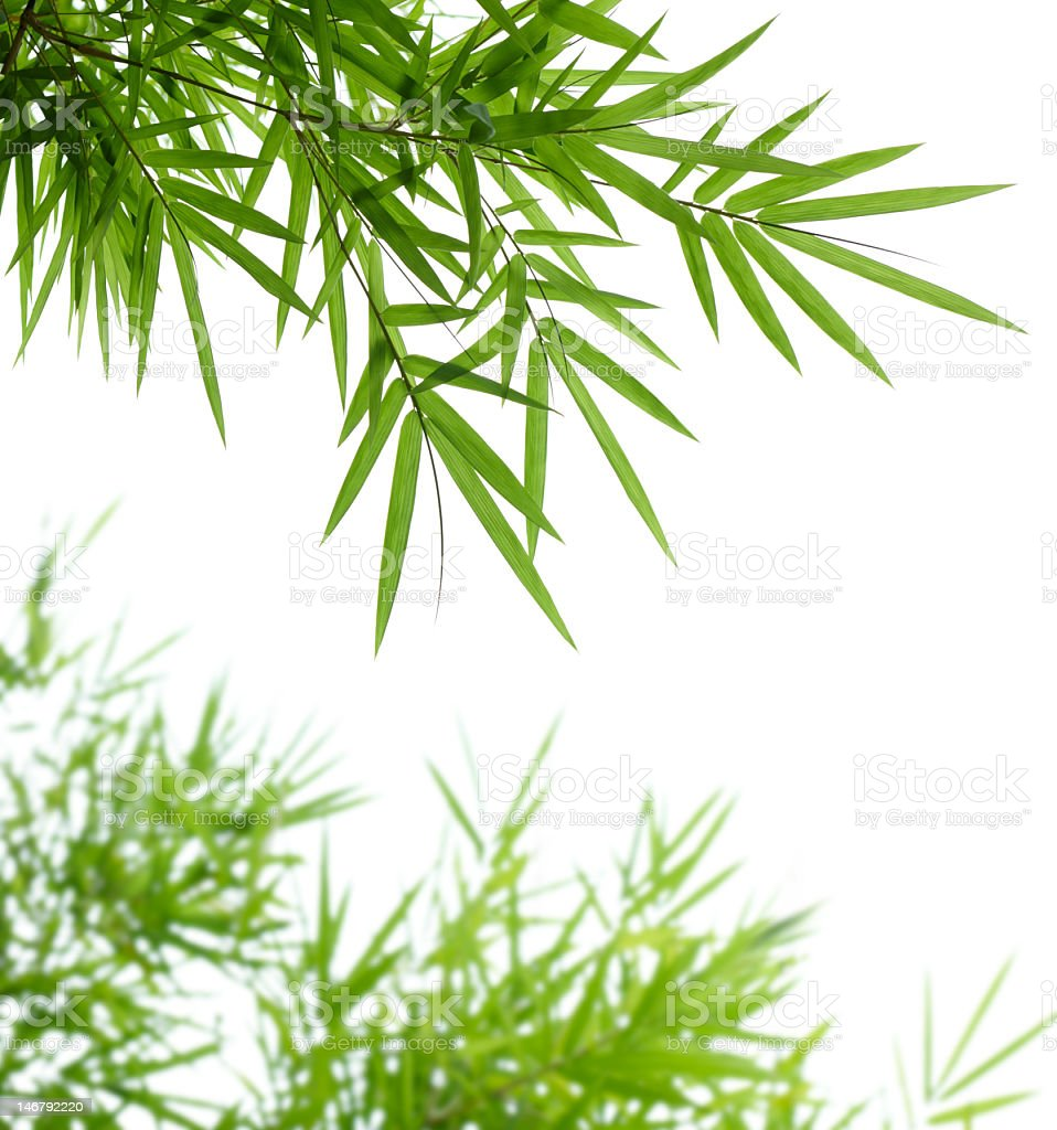 Close up of bright green bamboo leaves stock photo
