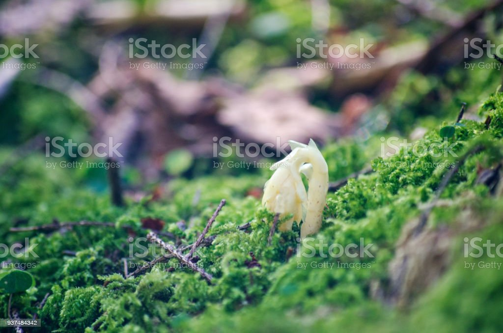 Close Up Of Bright Green Moss stock photo