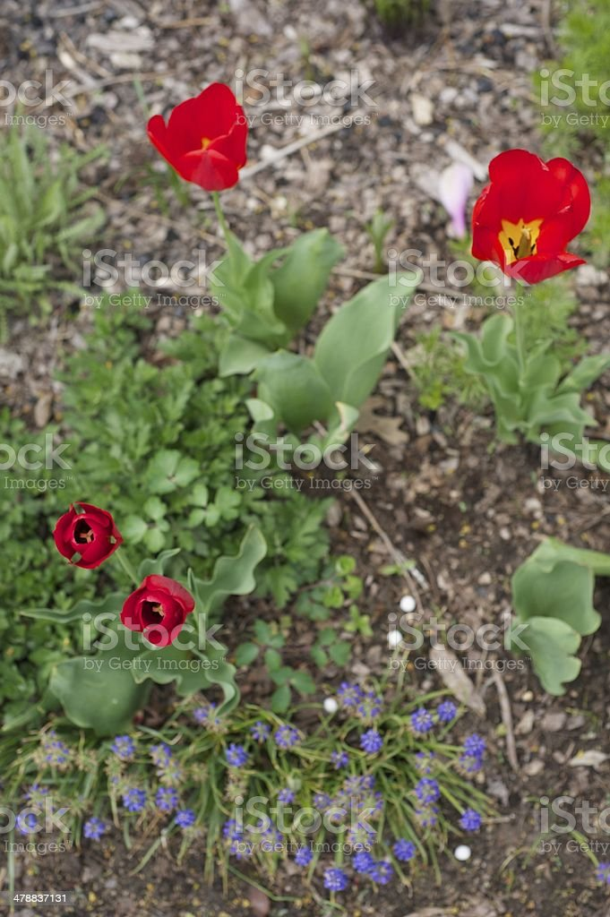 Close up of Bright Red Flowers stock photo
