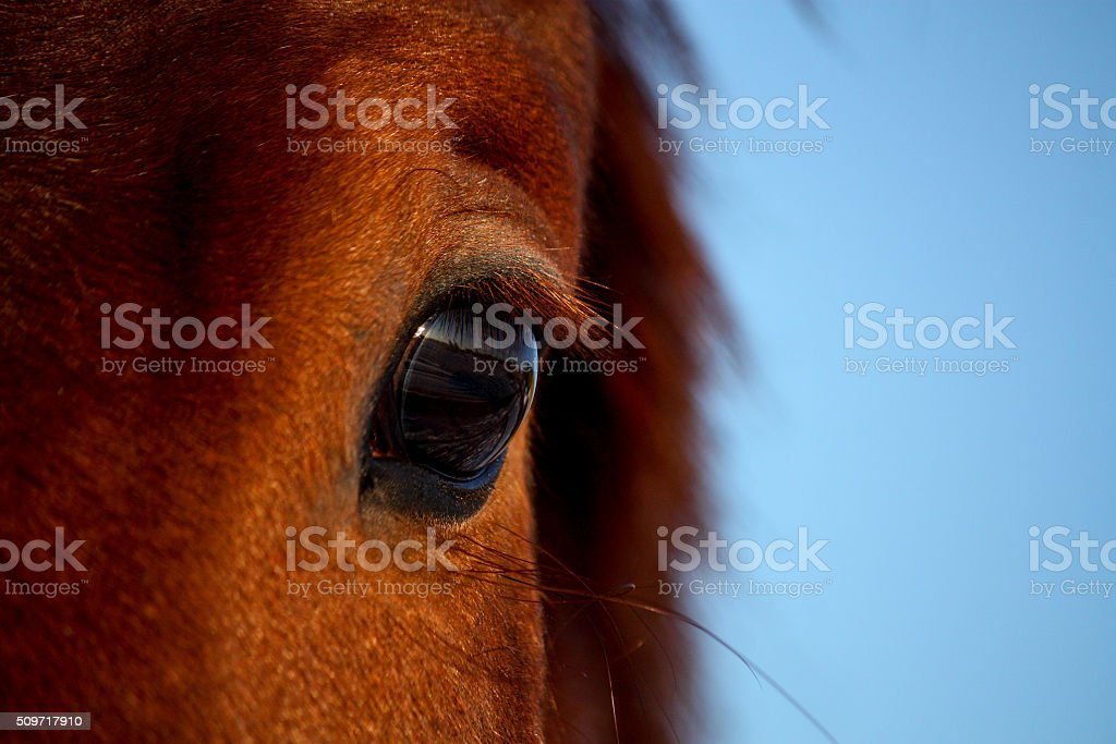 Close up of brown horse eye stock photo