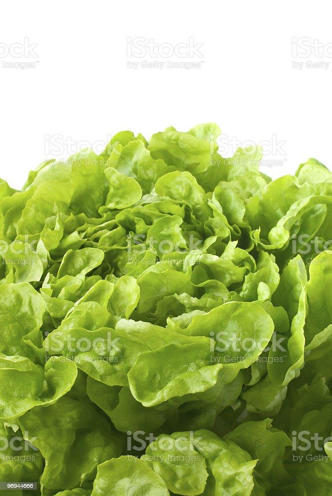 Close up of butterhead lettuce (macro) royalty-free stock photo