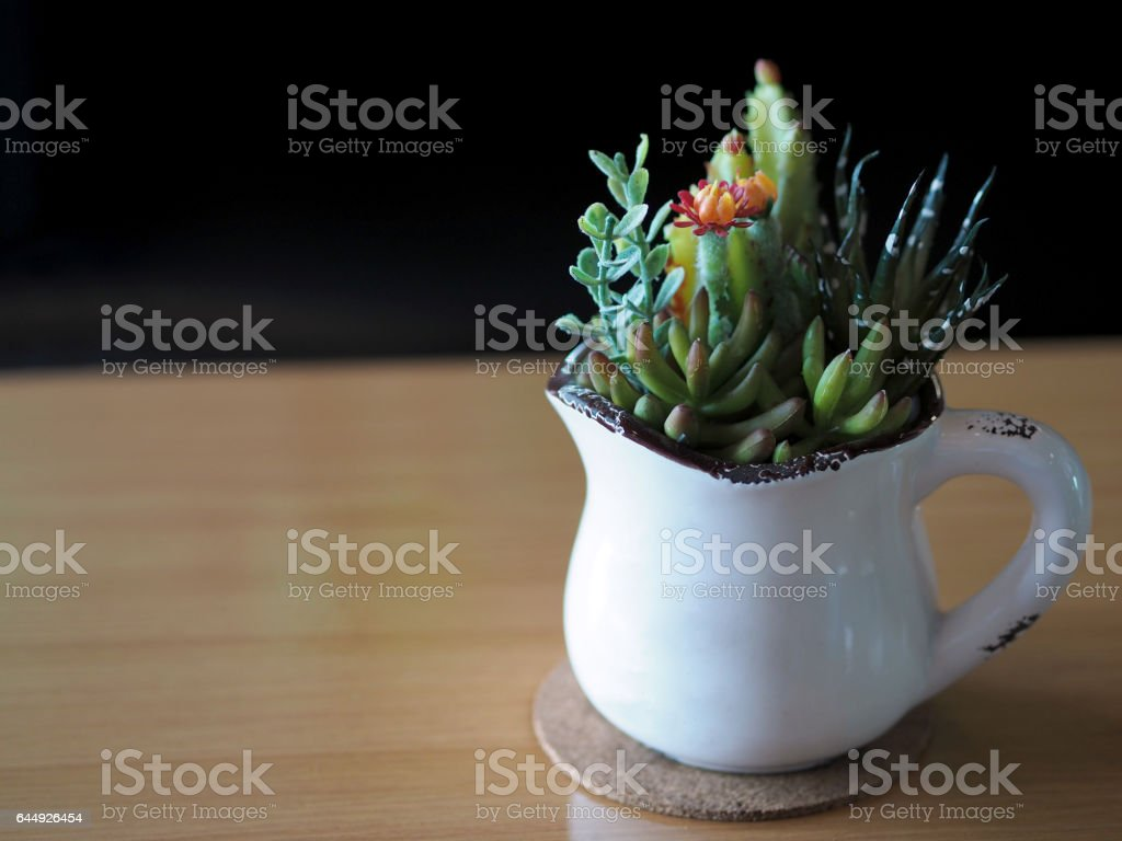 Close up of cactus flower,Mammillaria Shumanni, Shlumbergera, hyacinths in the white cup, on wooden table, Soft Focus. stock photo