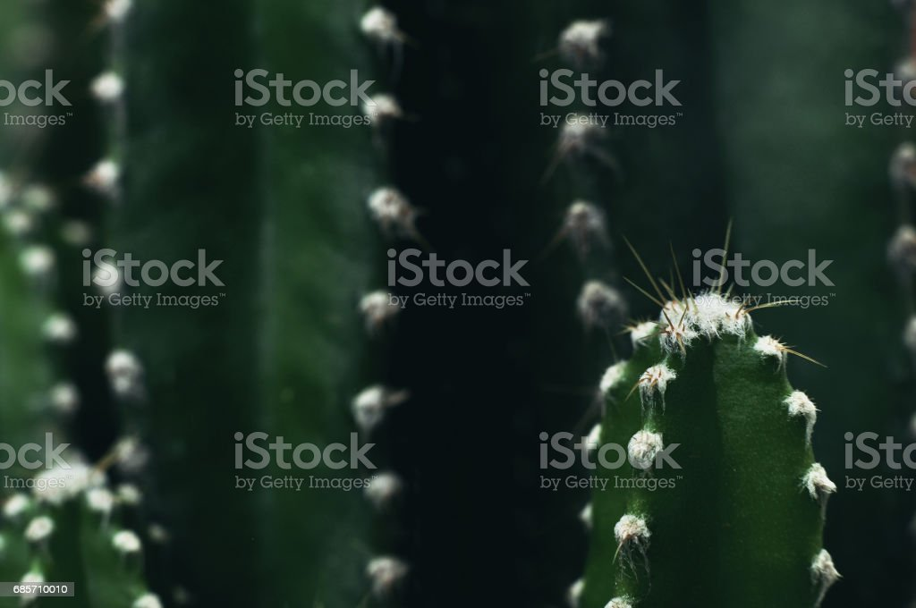 Close up of cactus in the garden foto de stock royalty-free