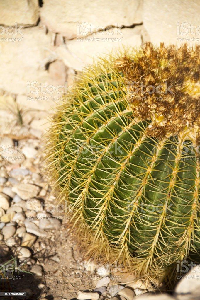 Close up of cactus stock photo