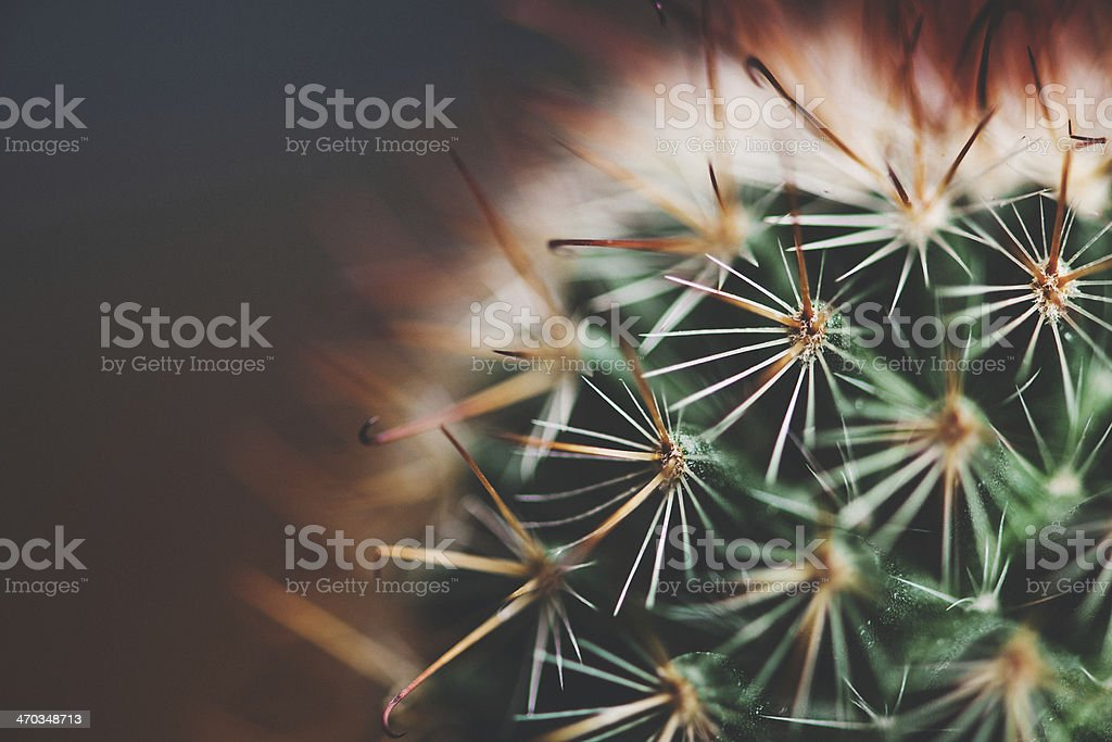 Close up of cactus royalty-free stock photo