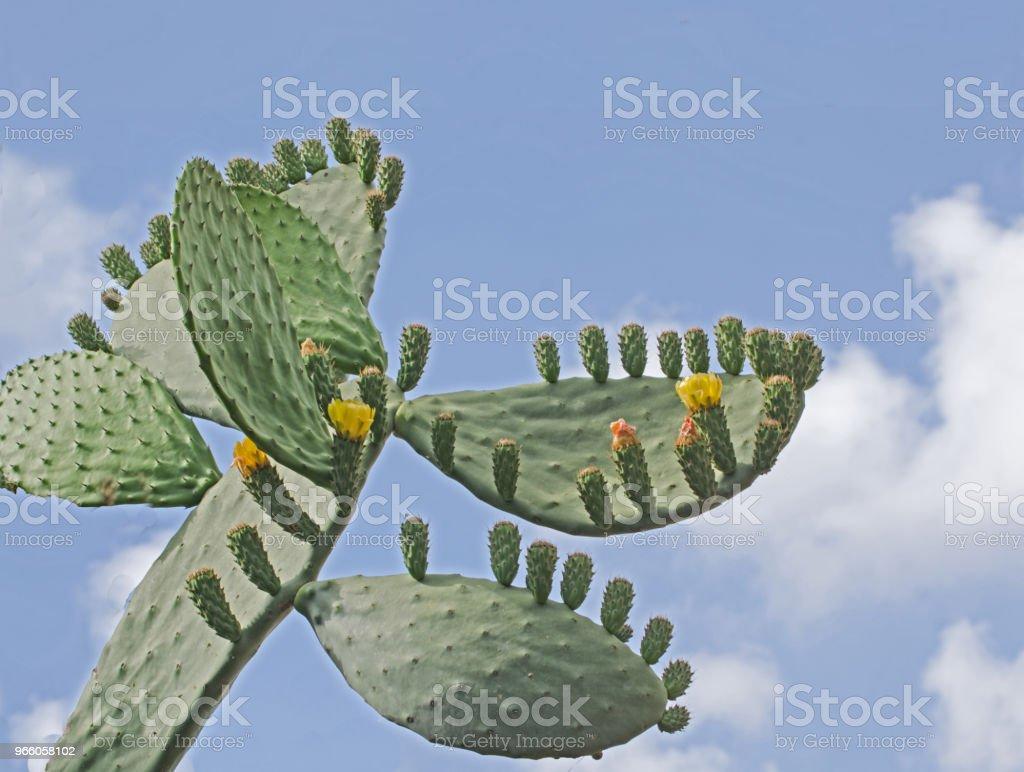 close up of cactus - Royalty-free Ao Ar Livre Foto de stock