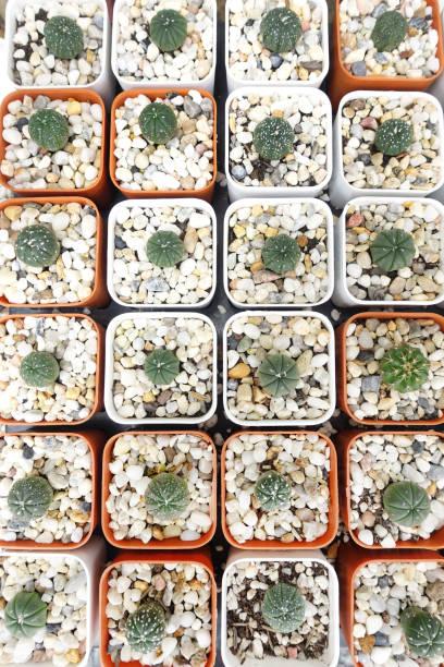 Close up of cactus plant – zdjęcie