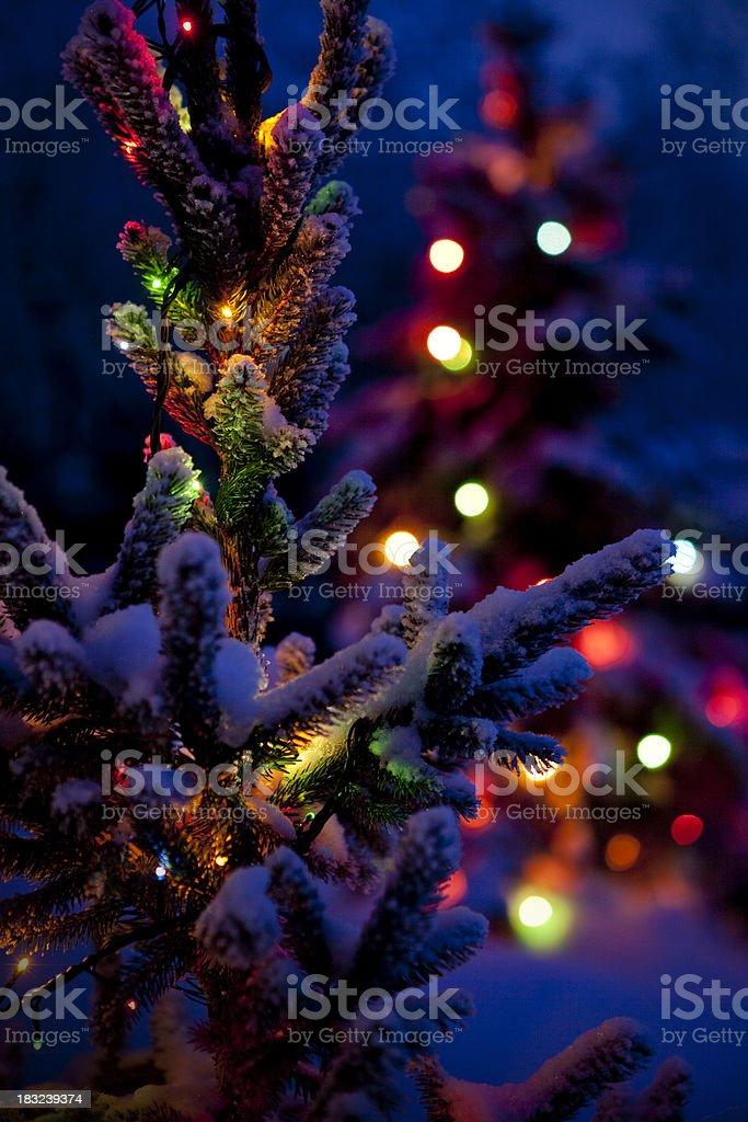 Close up of Christmas tree at night royalty-free stock photo