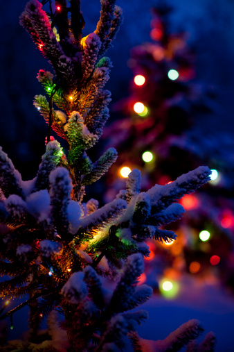 Close Up Of Christmas Tree At Night Stock Photo - Download Image Now