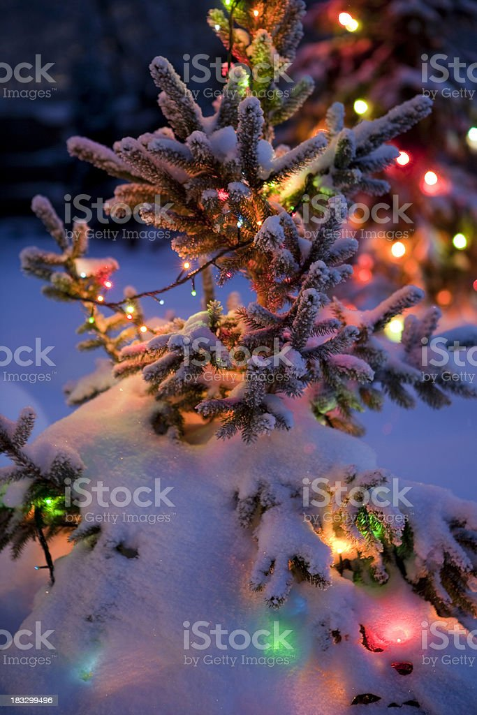 Close Up of Christmas tree with fresh and fluffy snow royalty-free stock photo